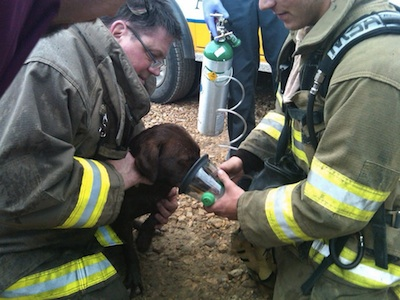 A Successful Dog Rescue